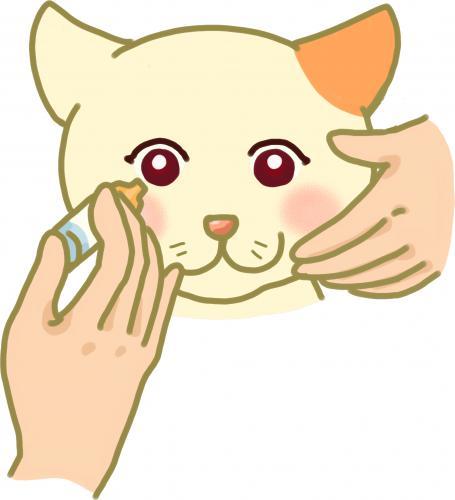 犬と猫の目の腫瘍についての話のつづき