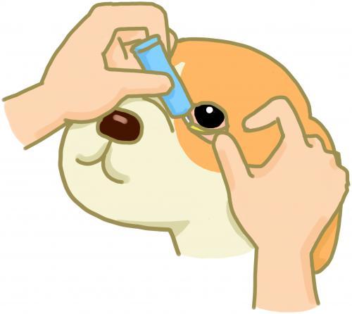 犬と猫の目にできる腫瘍としてのメラノーマ