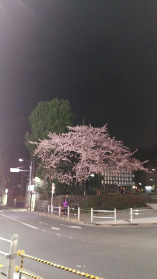 上野公園の桜を見てきました!