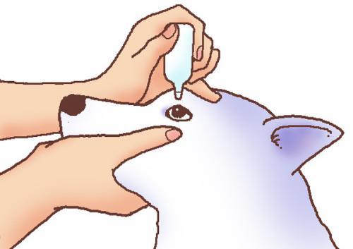 アメリカンコッカースパニエルでよくみられる白内障手術の合併症