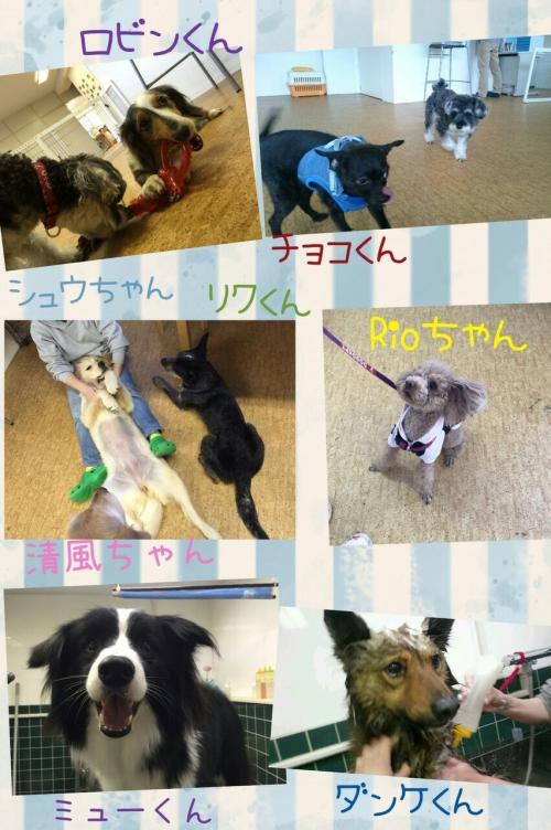 メキシコの犬事情から日本を見てみた