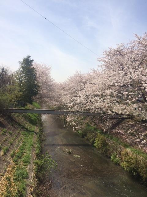 花見名古屋市北区