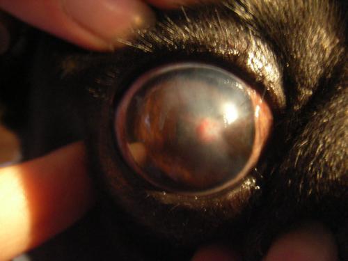 乾性角結膜炎の対策について