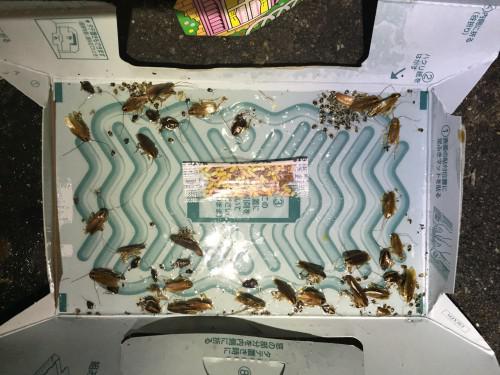 害虫駆除(ゴキブリ)業者の切替え。