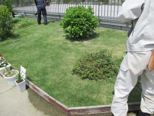 安行四季彩マットの屋上緑化!管理風景!