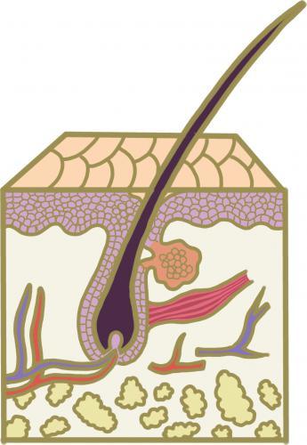 高齢動物の毛と皮膚のケア