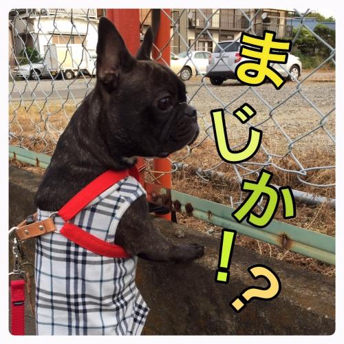 5/15(日)→ご予約変更出ました!