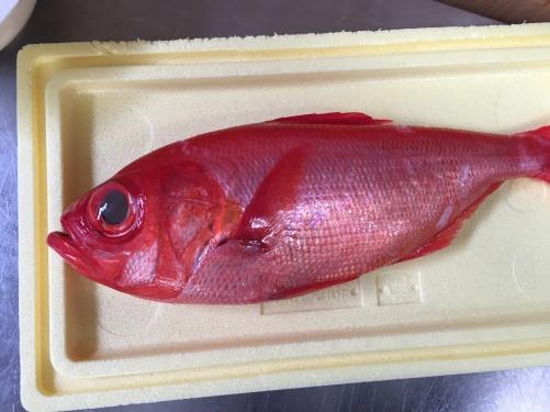 千葉県勝浦 唐木商店の金目鯛