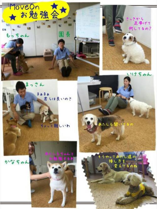 スイスの犬事情から日本を見てみる