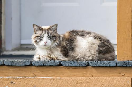 老猫で体重減少がみられるときに考えること2