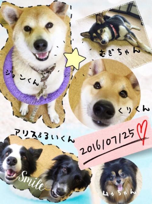 チェコの犬事情から日本を見てみる