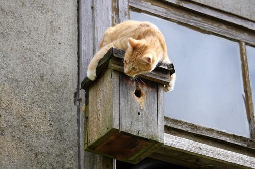 猫の特発性膀胱炎と空間