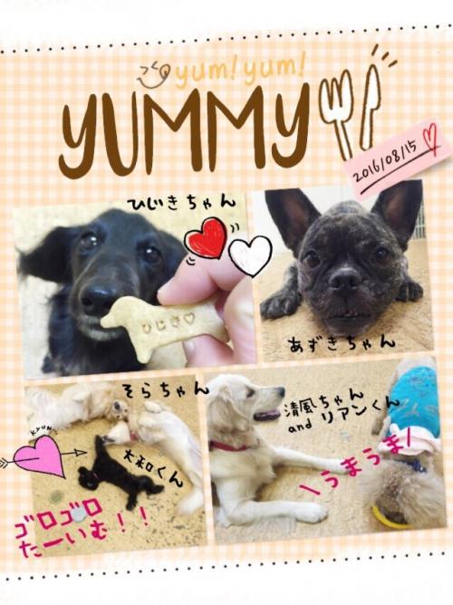 イタリアの犬事情から日本を見てみる