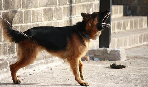 よく吠える犬種