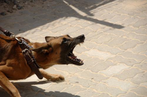 犬の視覚を介した攻撃姿勢と親和姿勢