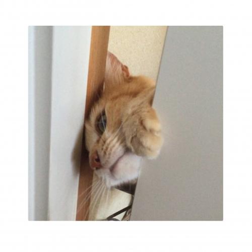 ドアが開けられない猫