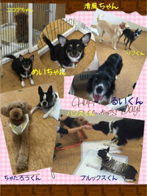 気圧の変化と犬の体調