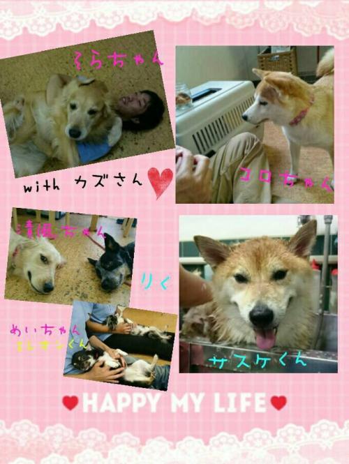 サイパンの犬事情から日本を見てみる