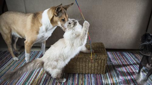 犬猫の常同障害の治療法の続き