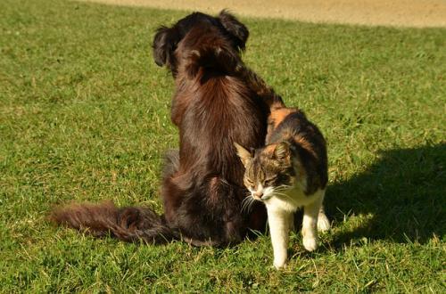 犬猫の排泄行動による問題行動