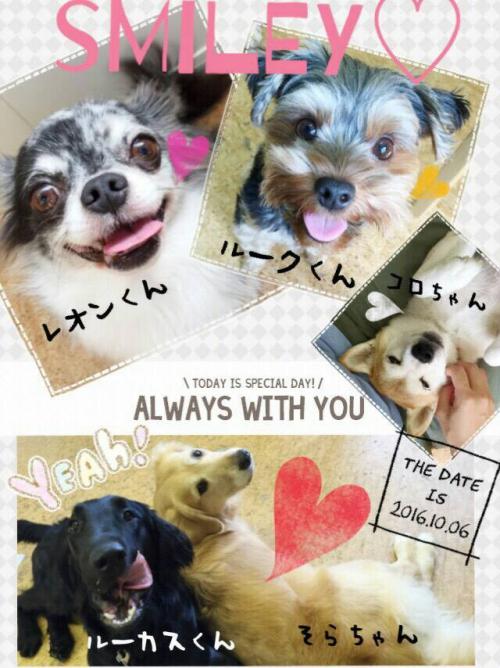 オーストリアの犬事情から日本を見てみる