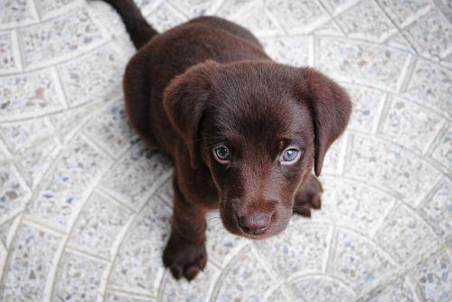 犬のトイレトレーニングの続きの話