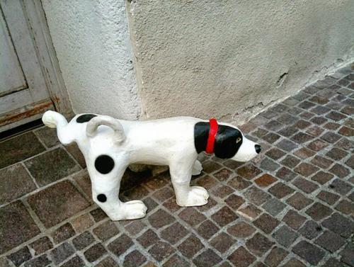 犬の性成熟によるマーキングの問題