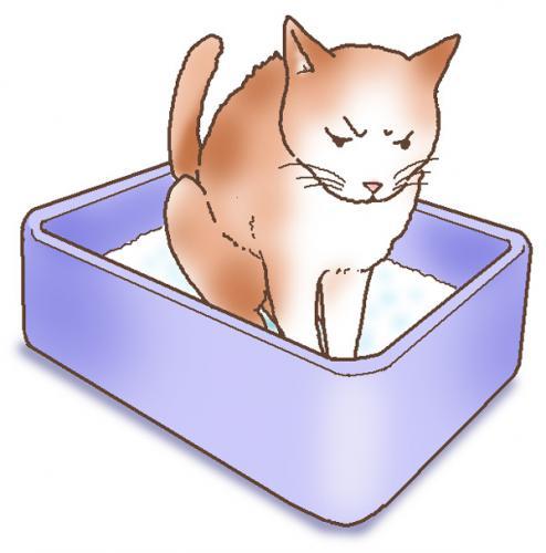 猫のマーキング以外の排泄による問題行動