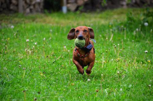 犬の吠えに対する問題行動