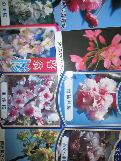 桜ラベルご紹介!桜の植木・苗木の販売!