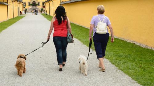 散歩中に吠える犬の対処