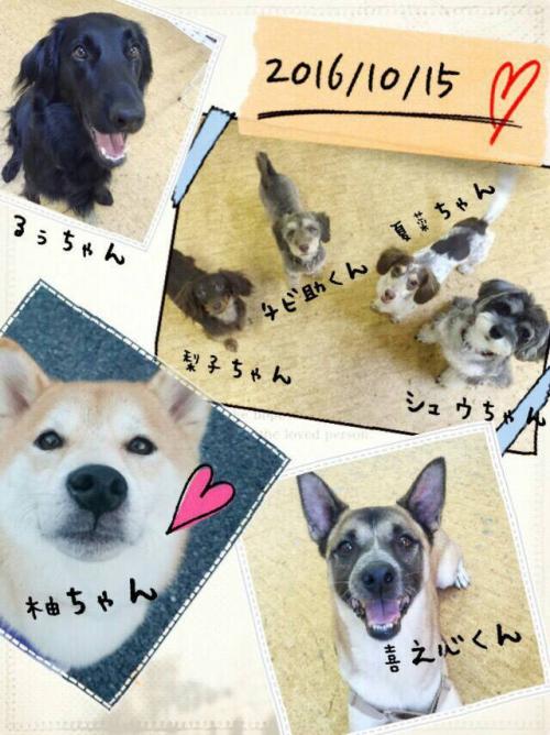 ボリビアの犬事情から日本を見てみる