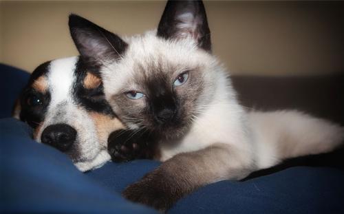 犬猫の問題行動の予防 動物の入手方法