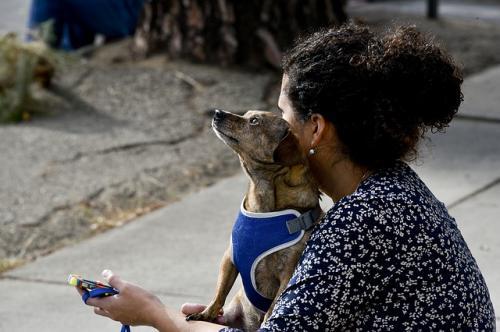 犬の問題行動を負のしつけによって治す難しさ