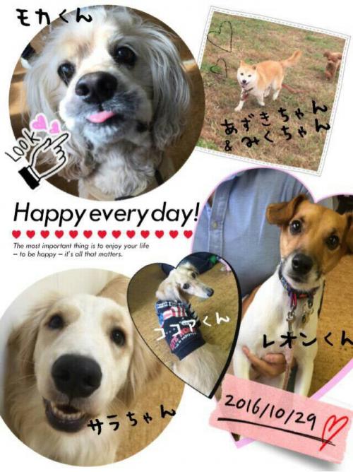 ハンガリーの犬事情から日本を見てみる