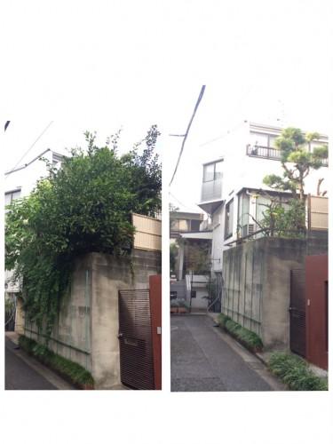 東京都世田谷区にて木の伐採、不用品回収サポート