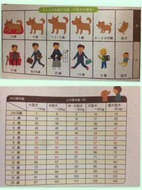 犬の年齢と歯周病と