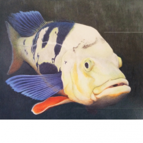 山田さんの色鉛筆画が世田谷区民絵画展で佳作に!