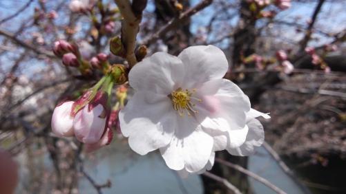 花粉ストレスにアロマも効果的!