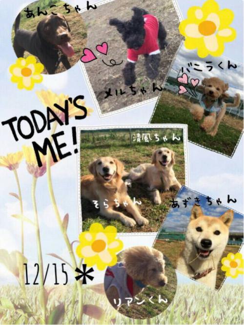 アフリカの犬事情から日本を見てみる