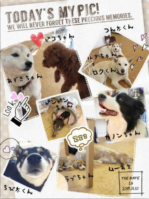 コスタリカの犬事情から日本を見てみる