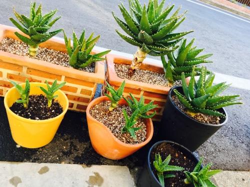 植木もカットと一緒でバランスです!調布美容室