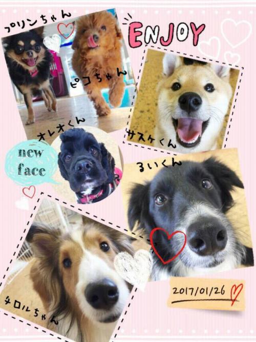 イランの犬事情から日本を見てみる