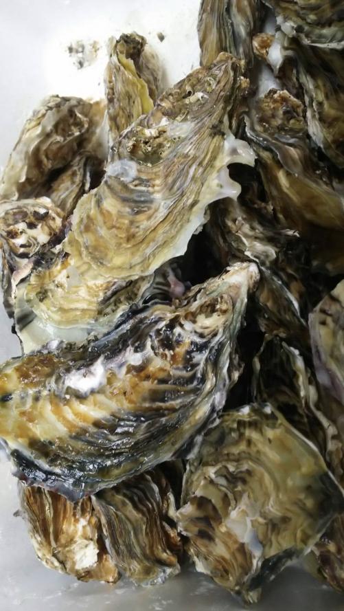 今年初 西の牡蠣 三重県 鳥羽 桃取