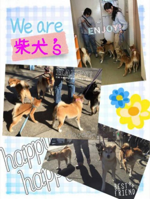 船橋市川 犬の保育園で10年やってます
