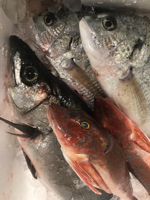 地魚 獲れたて ヒラスズキ 平鱸 ホウボウ