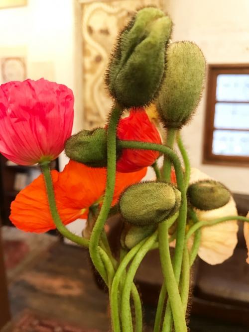 今週のお花♡  代官山  美容室