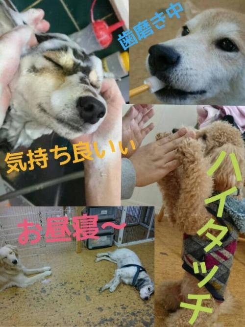 犬の中毒について