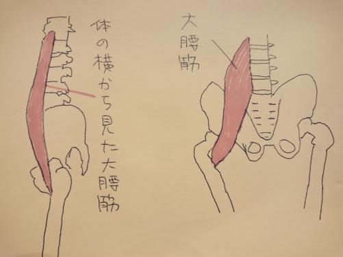 慢性腰痛の改善  大腰筋のこと その2 取手駅