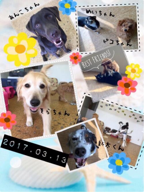 マウイ島の犬事情から日本を見てみる